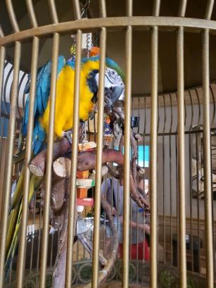 San Luis's chatty bird - Phydias